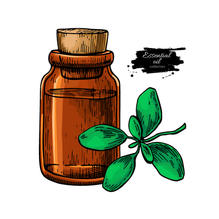 Marjoram essential oil bottle and marjoram leaves hand drawn vector illustration. Isolated plant drawing for Aromatherapy treatment, alternative medicine, beauty and spa, cosmetic ingredient.