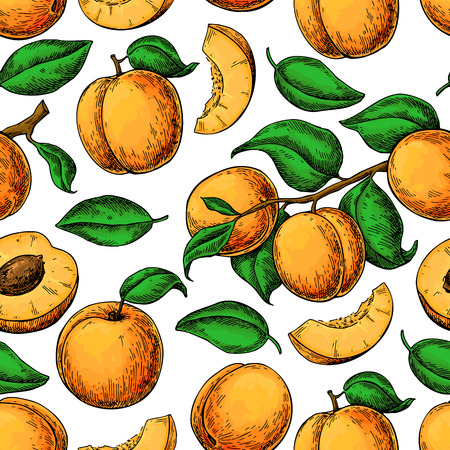 Apricot seamless pattern. Vector drawing. Hand drawn fruit, branch and sliced pieces. Summer food background. Detailed vegetarian sketch. Great for label, print, packaging,fabric