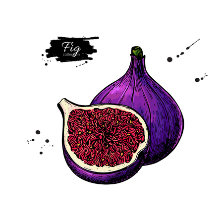 Fig icon