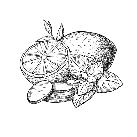 Lemon, mint and ginger vector drawing. Root, hearb leaf and frui