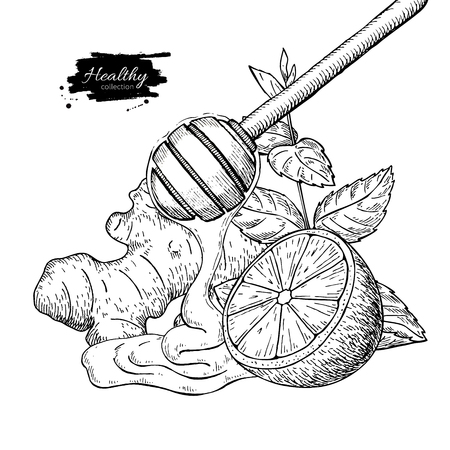 Honey, ginger, lemon and mint vector drawing. Wooden spoon, hone