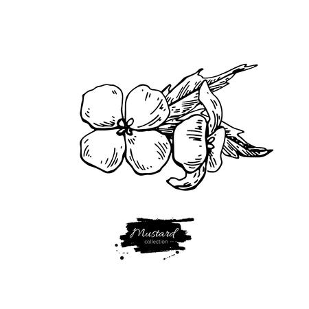 Mosterd plant tak vector tekening. Botanische bloemillustrati