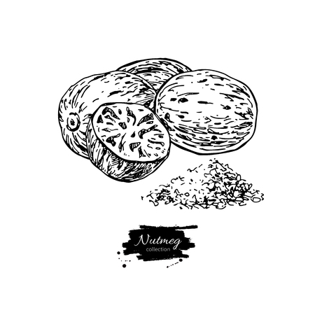 Nutmeg spice vector drawing. Ground seasoning nut sketch. Herbal ingredient, culinary and cooking flavor.  イラスト・ベクター素材