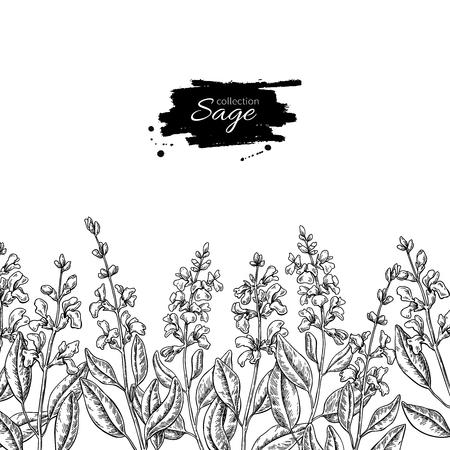 Salie vector tekening grens. Geïsoleerde plant met bloem en blad.