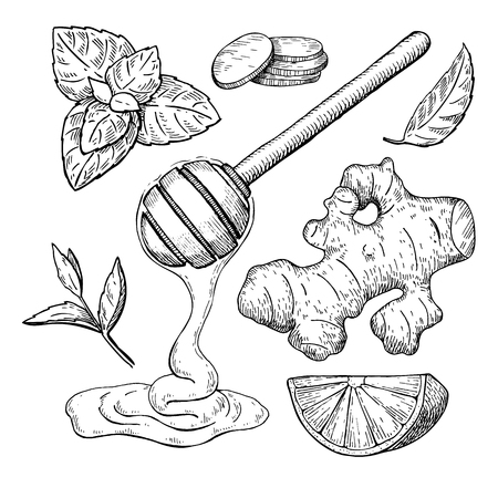 Dessin vectoriel de miel, gingembre, citron et menthe. Bocal, cuillère en bois, Vecteurs