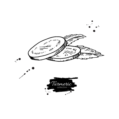 Turmeric root sliced pieces. Vector hand drawn illustration. Иллюстрация