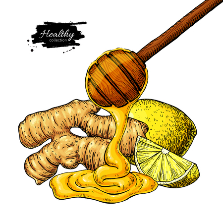 Ginger, honey and lemon vector drawing. Wooden spoon, honey drop, root and fruit slice sketch.