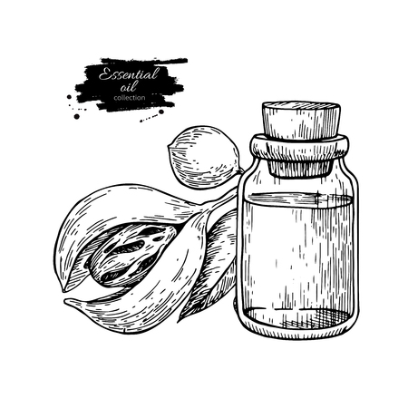 Mustard essential oil bottle and mace fruit, Hand drawn vector illustration.