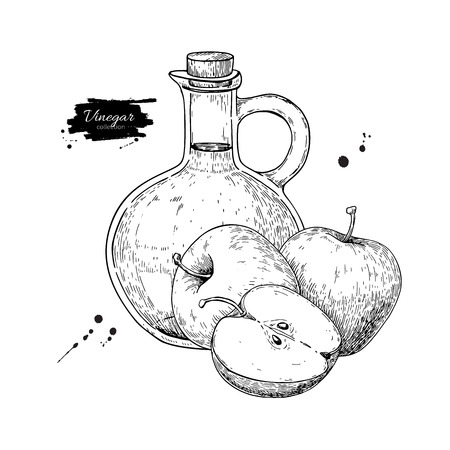 Apple vinegar vector drawing.  Hand drawn illustration. Glass bottle engraving. Isolated vintage  pitcher and fruit. Condiment and food dressing. Great for menu, banner, label, logo, flyer Archivio Fotografico - 100615485