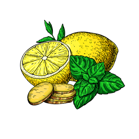 Lemon, mint and ginger vector drawing. Root, hearb leaf and fruit slice sketch. Illustration with tea or lemonade ingredient, alternative medicine, flu treatment. Label, icon, packaging design. Vector Illustration