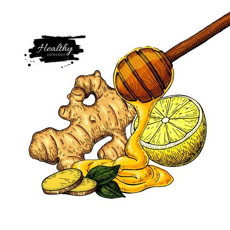 Honey, ginger and lemon vector drawing. Wooden spoon, honey drop, root and fruit slice sketch