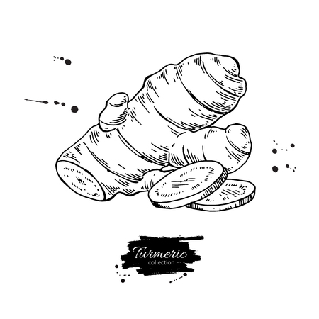 Turmeric root vector hand drawn illustration. Curcuma and sliced pieces drawing. Engraved style flavor. Herbal spice sketch. Detox food ingredient. Illusztráció
