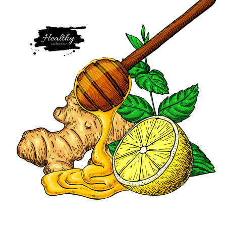Honey, ginger, lemon and mint vector drawing. Wooden spoon, honey drop, hearb leaf and fruit slice sketch. Illustration with tea ingredient, alternative medicine. Label, icon, packaging design.