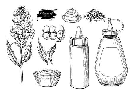 Mustard sauce Set. Vector drawing. Hand drawn food ingredient. Botanical flower branch and seed pile, bottle.
