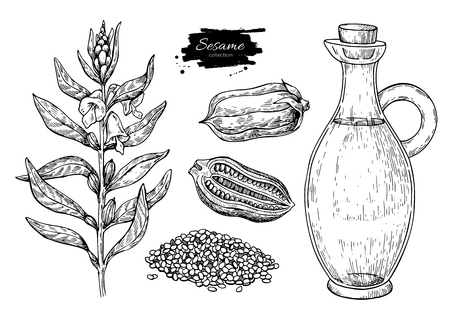 Bottle of sesame oil with plant and seed. Vector Hand drawn Reklamní fotografie