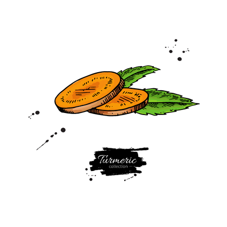 Turmeric root sliced pieces. Vector hand drawn illustration. Cur