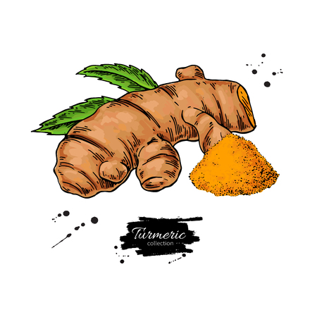 Turmeric root vector hand drawn illustration. Curcuma and powder