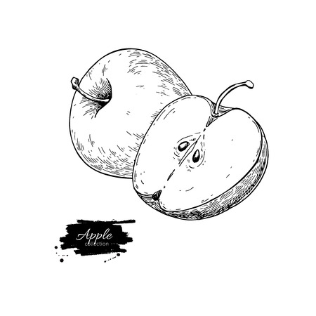 Apple vector drawing. Hand drawn fruit and sliced pieces. Summer  イラスト・ベクター素材