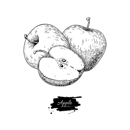 Apple vector drawing. Hand drawn fruit and sliced pieces.  イラスト・ベクター素材