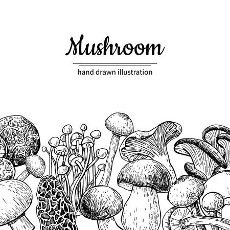 Cadre de vecteur dessiné main champignon. Modèle de dessin d'aliments biologiques de croquis isolé. Champignon, morille, truffe, enokitake, cèpes, huître, chanterelle, shiitake. Idéal pour le menu, l'étiquette, l'emballage du produit