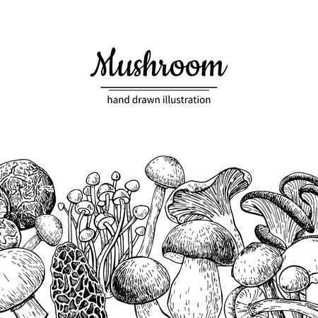 Mushroom hand drawn vector frame. Isolated Sketch organic food drawing template. Champignon, morel, truffle, enokitake, porcini, oyster, chanterelle, shiitake. Great for menu, label, product packaging