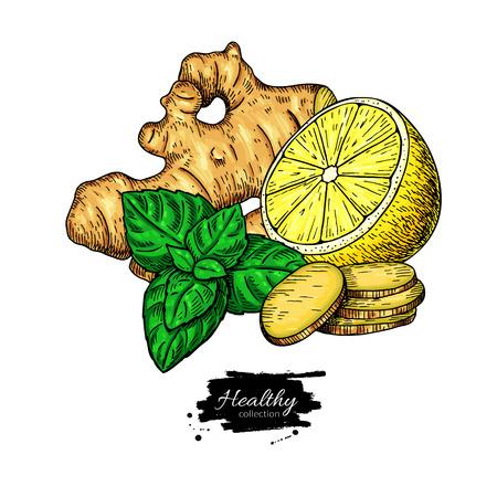 Ginger, lemon and mint vector drawing. Root, hearb leaf and fruit slice sketch. Illustration with tea or lemonade ingredient, alternative medicine, flu treatment. Label, icon, packaging design.