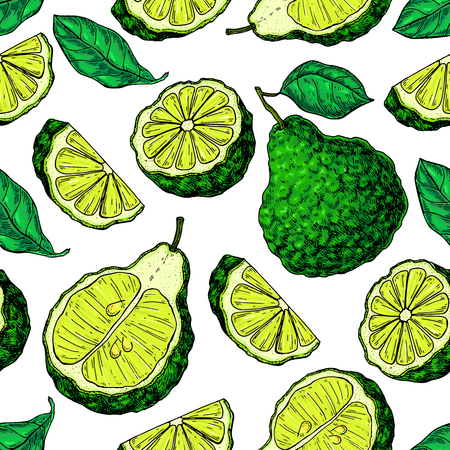 Bergamot vector seamless pattern drawing. Isolated vintage background of citrus fruit with slices. Organic food. Essential oil. Beauty and spa, cosmetic and tea ingredient.