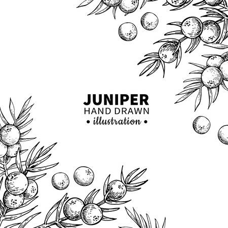 Juniper vector drawing frame. Isolated vintage  template of berry on branch. Organic essential oil engraved style sketch. Beauty and spa, cosmetic ingredient. Great for label, packaging design. Stock Illustratie