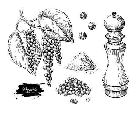 Schwarzer Pfeffer Vektor Zeichnungssatz. Pfefferkornhaufen, Mühle, getrockneter Samen, Pflanze, gemahlenes Pulver. Vektorgrafik