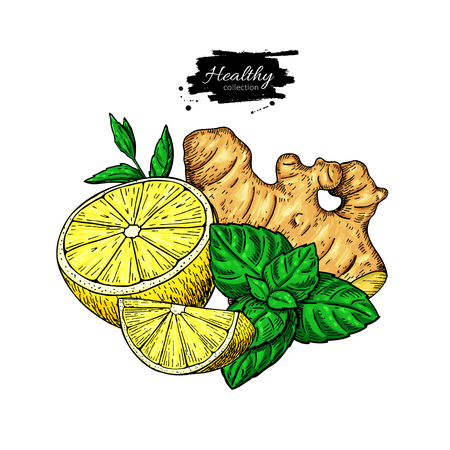 Lemon, ginger and mint vector drawing. Root, hearb leaf and fruit slice sketch. Illustration with tea or lemonade ingredient, alternative medicine, flu treatment. Label, icon, packaging design. Banque d'images - 101026640
