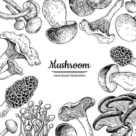 Blocco per grafici di vettore disegnato a mano del fungo. Modello di disegno di cibo biologico schizzo isolato. Champignon, spugnole, tartufo, enokitake, porcini, ostriche, gallinacci, shiitake. Ottimo per l'imballaggio di prodotti con etichette di menu