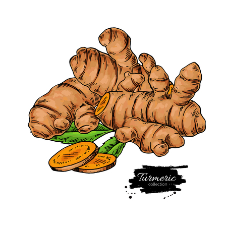Turmeric root vector hand drawn illustration. Curcuma and sliced pieces drawing. Colorful flavor. Herbal spice sketch. Detox food ingredient.