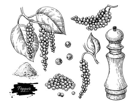 Schwarzer Pfeffer Vektor Zeichnungssatz. Pfefferkornhaufen, Mühle, getrockneter Samen, Pflanze, gemahlenes Pulver. Vintage Hand gezeichnete Gewürzskizze. Kräutergewürz Zutat, kulinarische und Kochgeschmack.