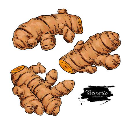 Turmeric root vector hand drawn illustration. Curcuma sketch drawing. Natural flavor. Herbal spice. Detox food ingredient. Ilustração