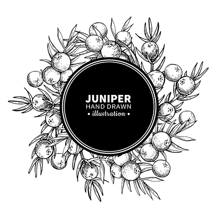 Juniper vector drawing frame. Isolated vintage  template of berr Stockfoto