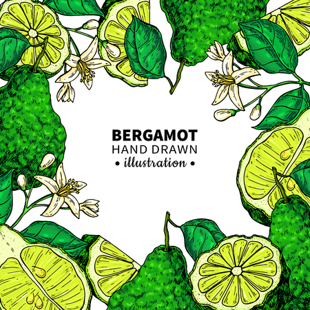 Bergamot vector drawing frame. Isolated template of citrus fruit, flower, slice. Essential oil colorful sketch. Beauty and spa, cosmetic, tea ingredient. Great for label, flyer, packaging design. Vettoriali