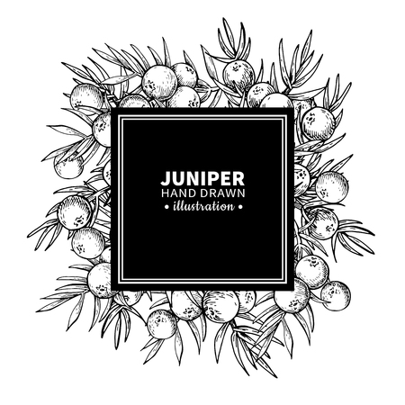 Juniper vector drawing frame. Isolated vintage  template of berr Ilustrace