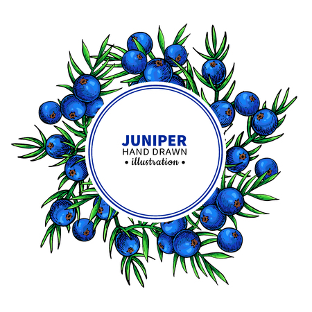 Juniper vector drawing frame. Isolated template with berry on branch. Organic essential oil Stock Illustratie