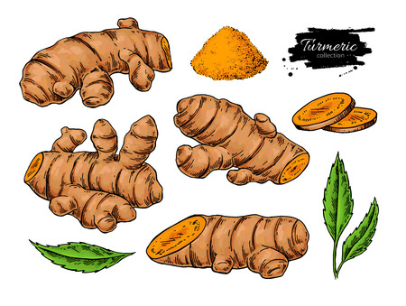 Turmeric root vector hand drawn illustration.  Curcuma, powder, Фото со стока