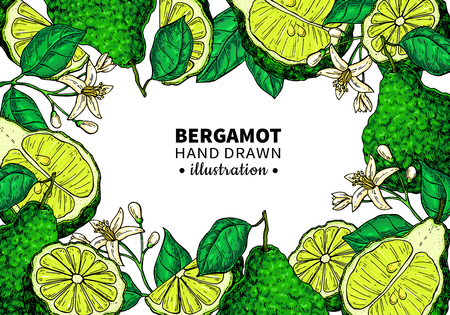 Bergamot vector drawing frame. Isolated template of citrus fruit