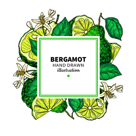 Bergamot vector drawing frame. Isolated template of citrus fruit
