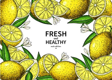 Lemon label vector drawing. Citrus fruit frame template.  イラスト・ベクター素材