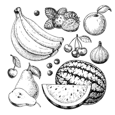 Fruit and berry vector drawing set. Hand drawn summer food