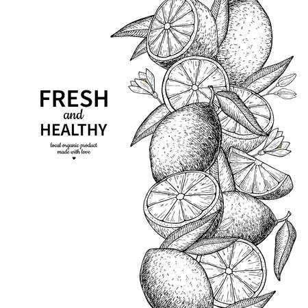 Lemon border vector drawing. Citrus fruit engraved frame templat Foto de archivo - 103988275