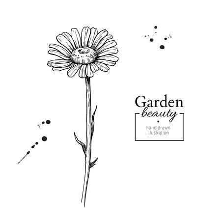Disegno del fiore della margherita. Insieme floreale inciso disegnato a mano di vettore. Cha Vettoriali