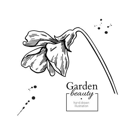 Violet flower drawing. Vector hand drawn engraved floral set.