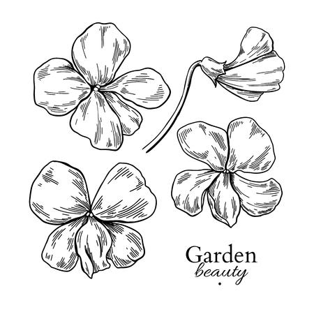 Dessin de fleur violette. Ensemble floral gravé à la main de vecteur. Croquis d'encre noire d'alto. Fleur de jardin botanique sauvage. Idéal pour l'emballage de thé, l'étiquette, l'icône, les cartes de voeux, la décoration