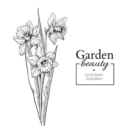 Rysunek bukiet kwiatów i liści żonkila. Wektor ręcznie rysowane grawerowany zestaw kwiatowy. Szkic botaniczny czarnym tuszem. Świetne do tatuażu, zaproszeń, kartek okolicznościowych, wystroju