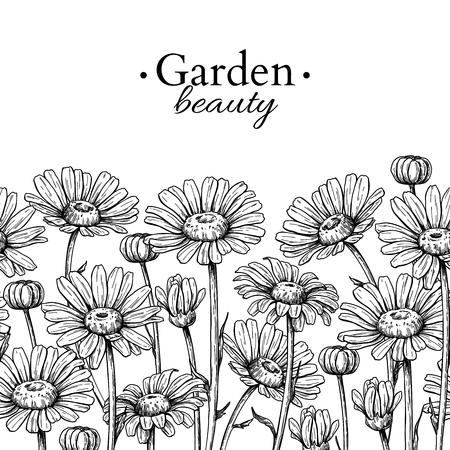 Gänseblümchenblumenrandzeichnung. Vektor Hand gezeichnet graviertes Blumen nahtloses Muster. Rahmenrahmenskizze der schwarzen Kamille. Wilde botanische Gartenblüte. Ideal für Teeverpackungen, Etiketten, Symbole, Grußkarten, Vektorgrafik