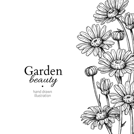 Gänseblümchenblumenrandzeichnung. Vektor Hand gezeichnet gravierte Blumenrahmen. Kamille